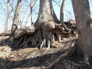 Amazing roots