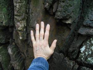 Tree as healer